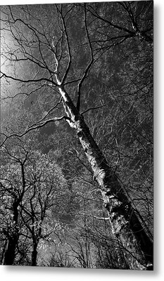 Tree Capillaries Metal Print