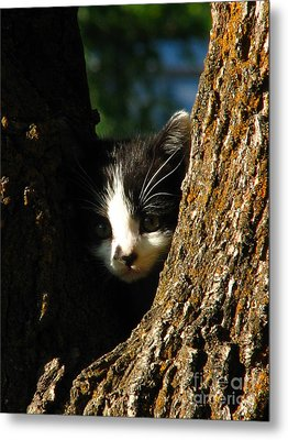 Tree Cat Metal Print by Greg Patzer