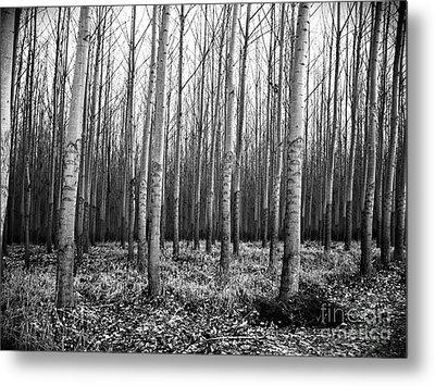 Tree Farm Metal Print by Chalet Roome-Rigdon