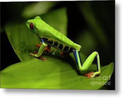 Tree Frog 12 Metal Print by Bob Christopher