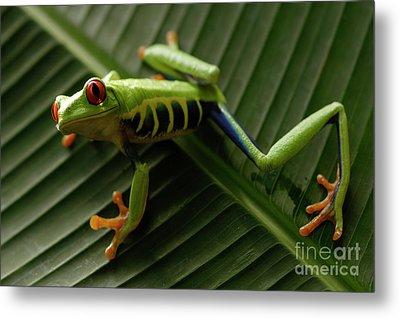 Tree Frog 16 Metal Print by Bob Christopher