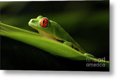Tree Frog 7 Metal Print by Bob Christopher