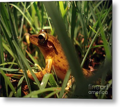 Metal Print featuring the photograph Tree Frog Chorus by Megan Dirsa-DuBois