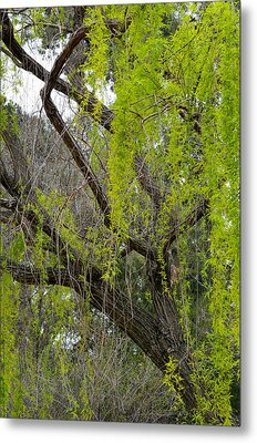 Tree Green Metal Print