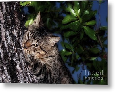 Metal Print featuring the photograph Tree Hugging Cat by Marjorie Imbeau