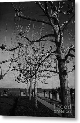 Tree In A Row  Metal Print by Andrea Anderegg
