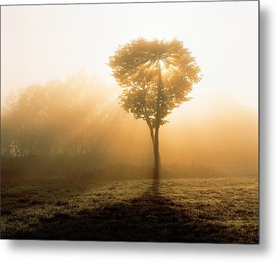 Tree In Early Morning Mist Metal Print by Panoramic Images