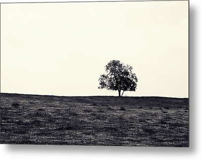 Tree In Field Metal Print by Kara  Stewart
