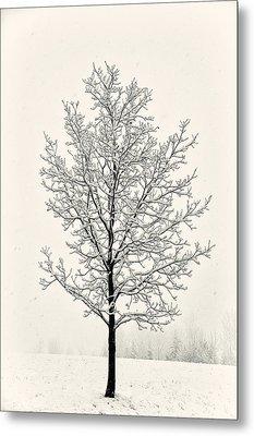 Tree In Heavy Snow Metal Print by Joseph Duba