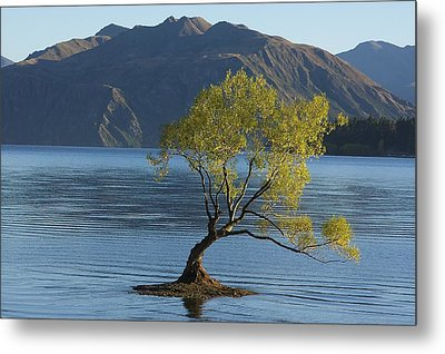 Tree In Lake Wanaka Metal Print by Stuart Litoff