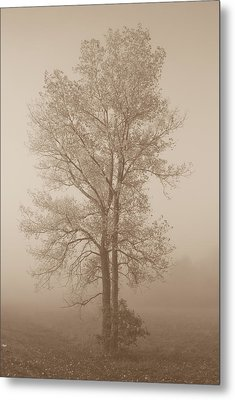 Tree In Morning Fog Metal Print by Eje Gustafsson