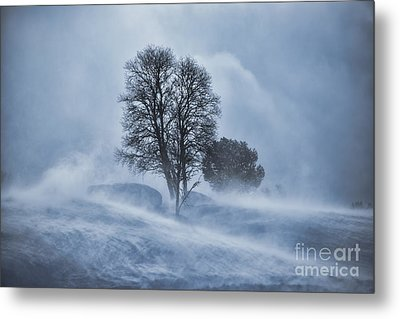 Tree In Snow Blizzard Metal Print