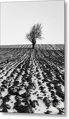 Tree In Snow Metal Print by John Farnan