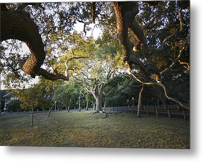 Tree In St. Augustine Park Metal Print
