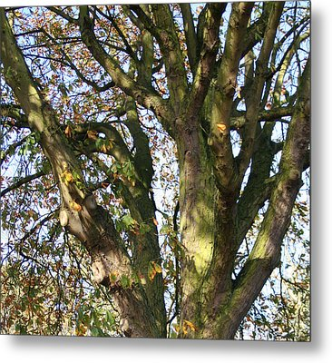 Tree In Sunlight Metal Print