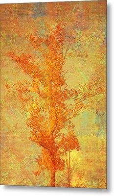 Tree In Sunlight Metal Print