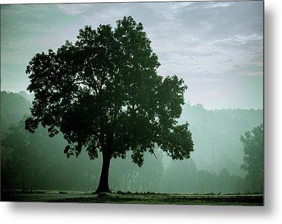 Tree In The Fog Metal Print