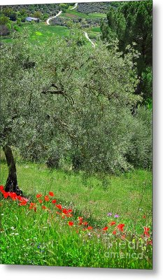 Tree In The Meadow Near Ronda  Metal Print by Mary Machare