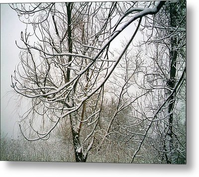 Tree Lace Metal Print by Desline Vitto