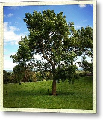 Tree Metal Print by Les Cunliffe