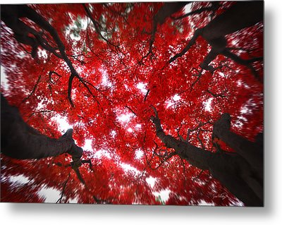 Metal Print featuring the photograph Tree Light - Maple Leaves Fall Autumn Red by Jon Holiday