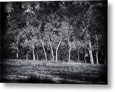 Tree Line In Autumn  Metal Print