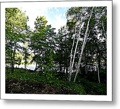 Tree Lined Lake Metal Print by Dianne  Lacourciere