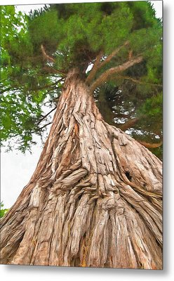 Tree Mass Metal Print by Marion Johnson