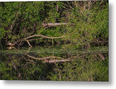 Metal Print featuring the photograph Tree Mirroring In Water by Leif Sohlman