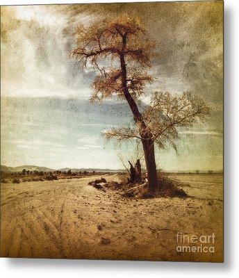 Tree Near The Road Metal Print by Pam Vick