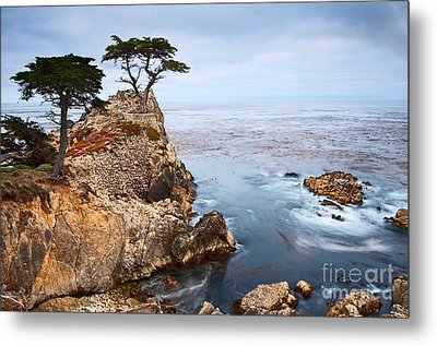 Tree Of Dreams - Lone Cypress Tree At Pebble Beach In Monterey California Metal Print by Jamie Pham