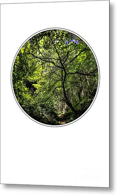Tree Of Life Metal Print by Holly Martin