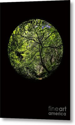 Tree Of Life II Metal Print by Holly Martin