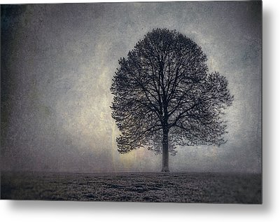 Tree Of Life Metal Print by Scott Norris