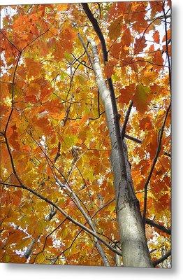Tree Of Orange Metal Print by Guy Ricketts