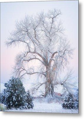 Tree Of Snow Metal Print