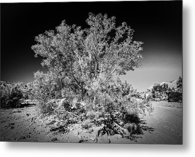 Tree Of The Desert Metal Print