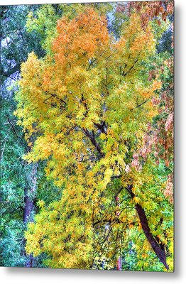 Metal Print featuring the photograph Tree On Fountain Creek by Lanita Williams