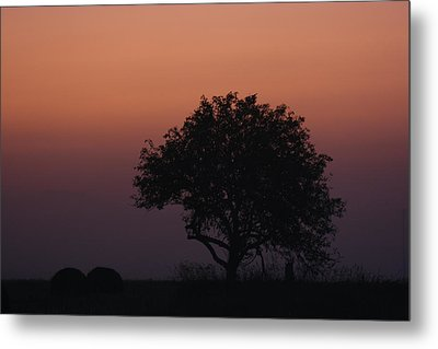 Tree Metal Print by Paula Brown