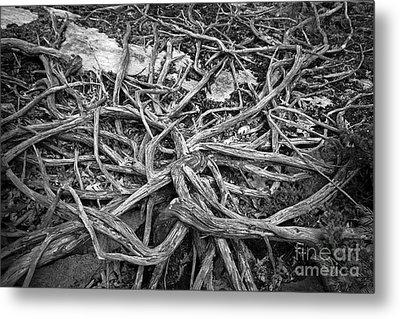 Tree Remains Metal Print by Charline Xia