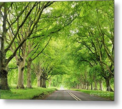 Tree Avenue Metal Print