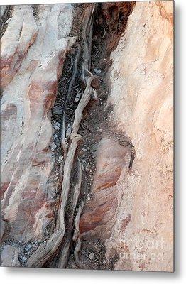 Tree Root Embedded Metal Print