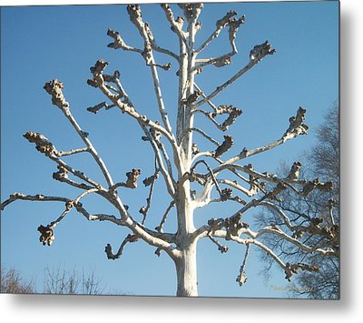 Tree Sculpture Metal Print by Paula Rountree Bischoff