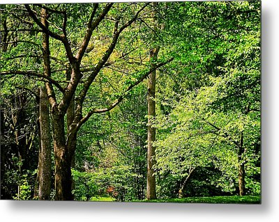 Metal Print featuring the photograph Tree Series 3 by Elf Evans