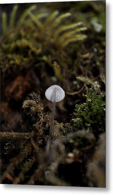 Tree 'shroom Metal Print by Cathy Mahnke