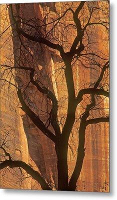 Tree Silhouette Against Sandstone Walls Metal Print