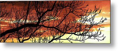 Tree Silhouette At Sunset, Warner Metal Print