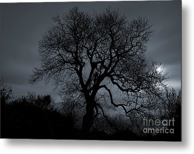 Tree Silhouette Metal Print by Ian Mitchell