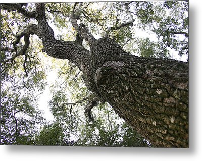 Tree Still Metal Print