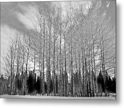 Metal Print featuring the photograph Tree Sweep by Tarey Potter
